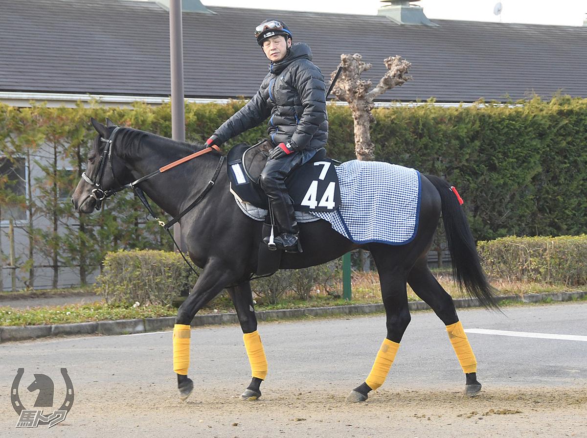 ニードルズアイの馬体写真