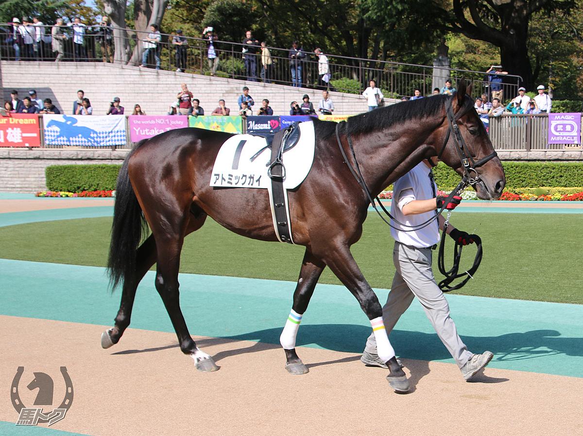 アトミックガイの馬体写真