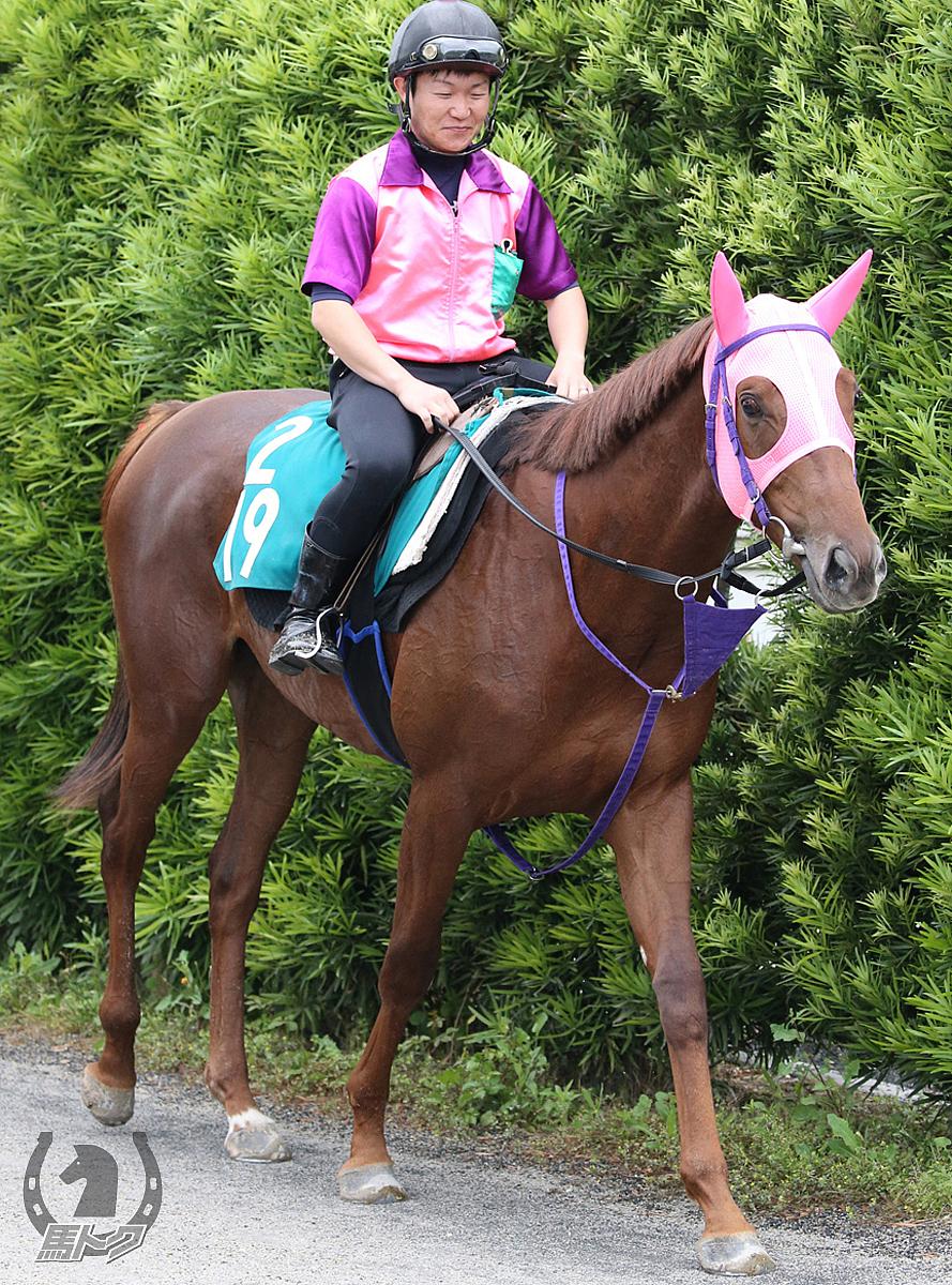 ショウリュウイクゾの馬体写真