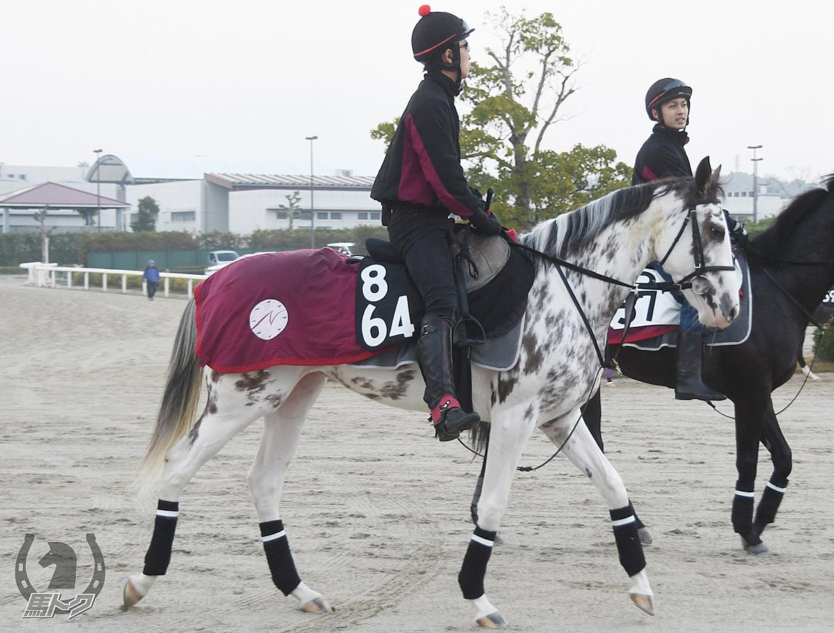 ブッチーニの馬体写真
