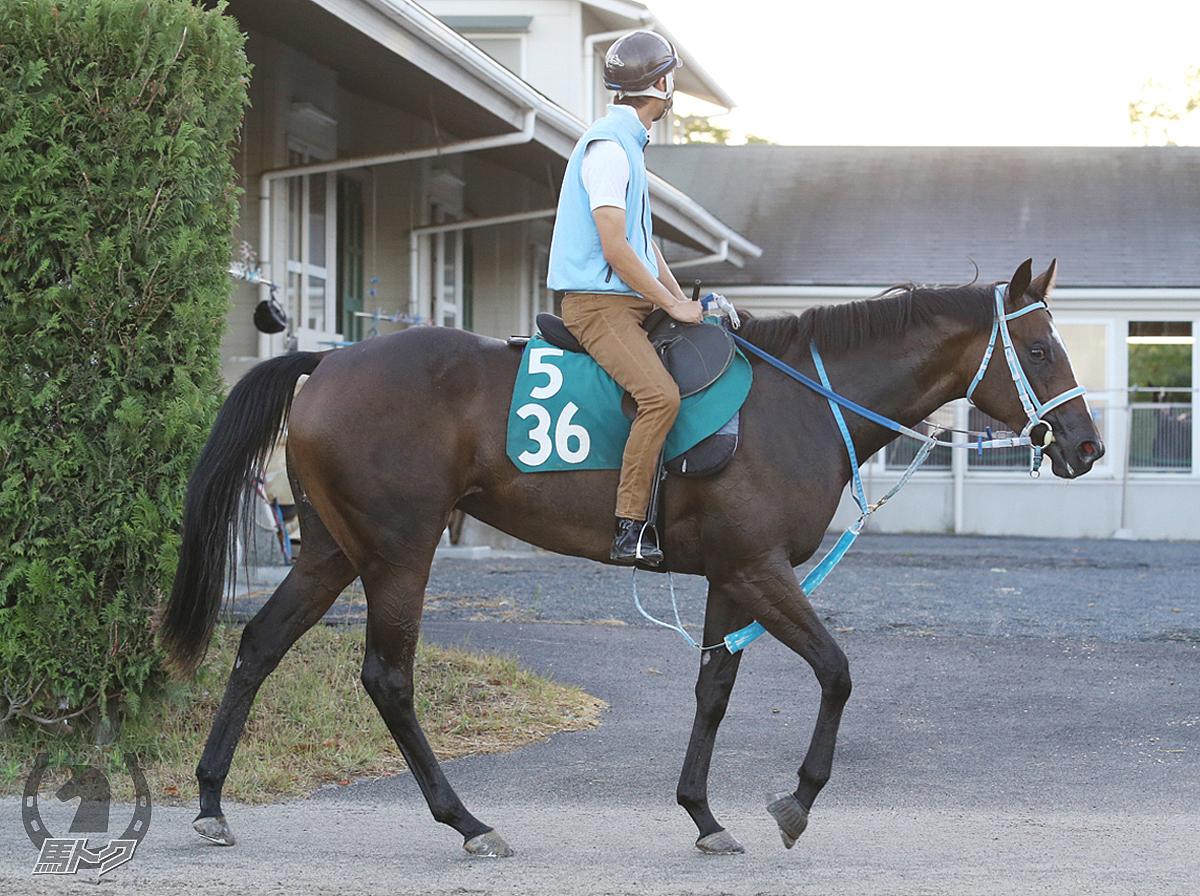 ルチアーナミノルの馬体写真