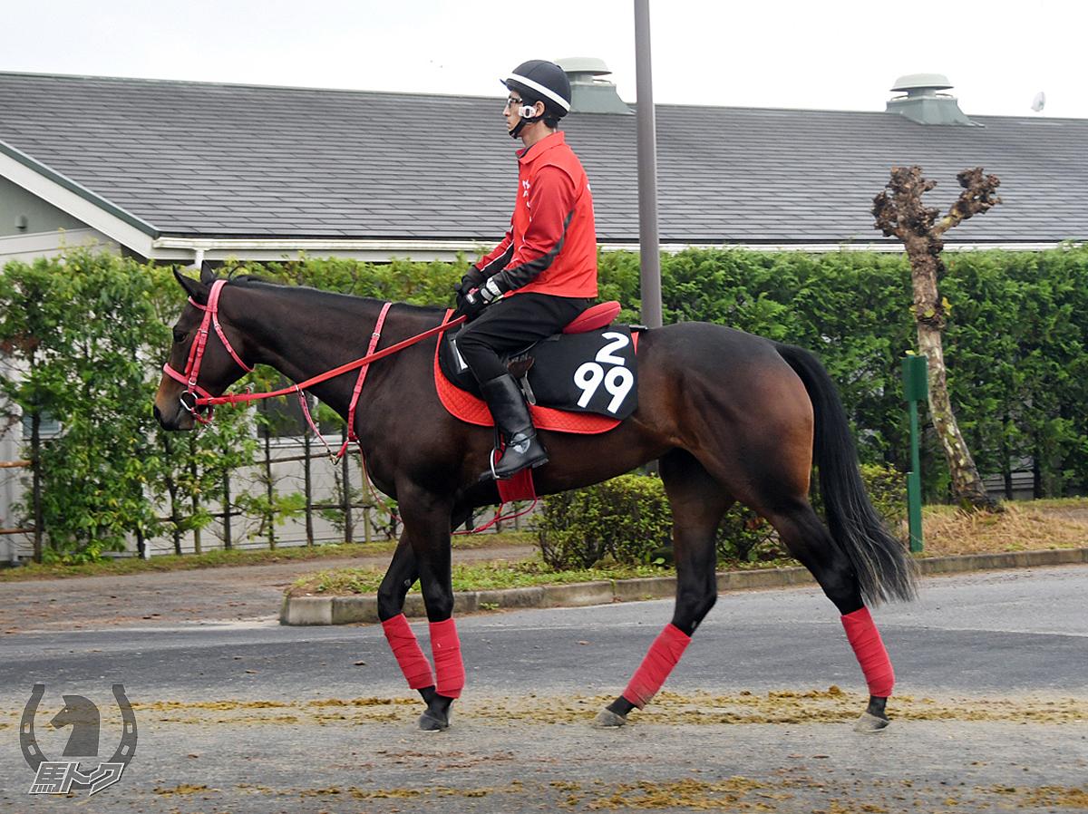 クリスタルオーブの馬体写真