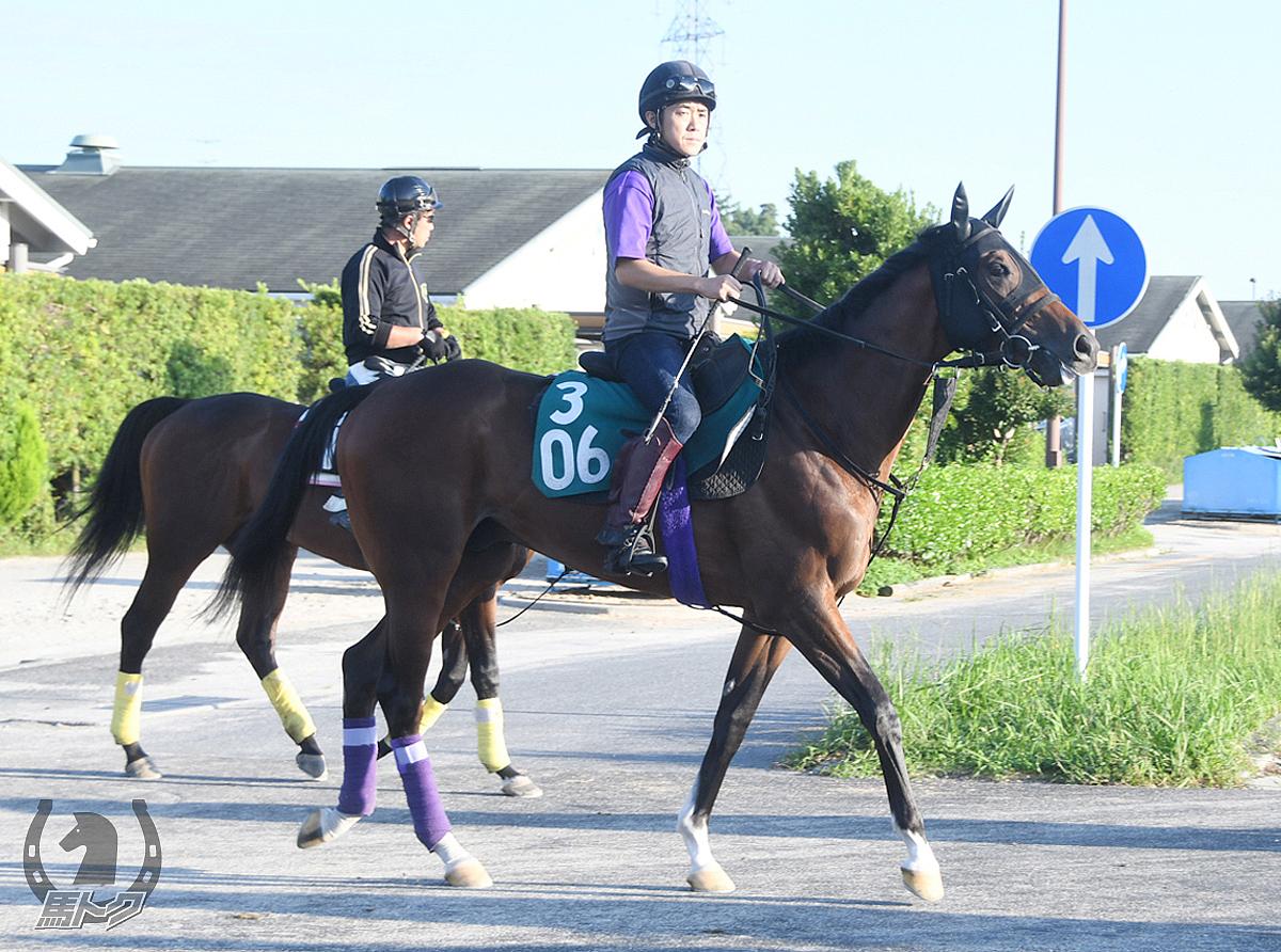 アドマイヤユラナスの馬体写真