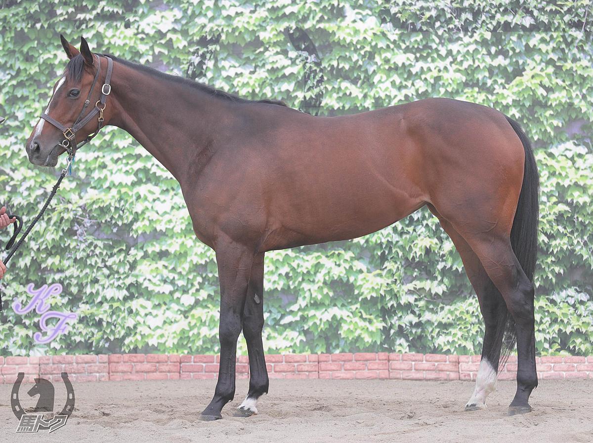 スイープセレリタスの馬体写真