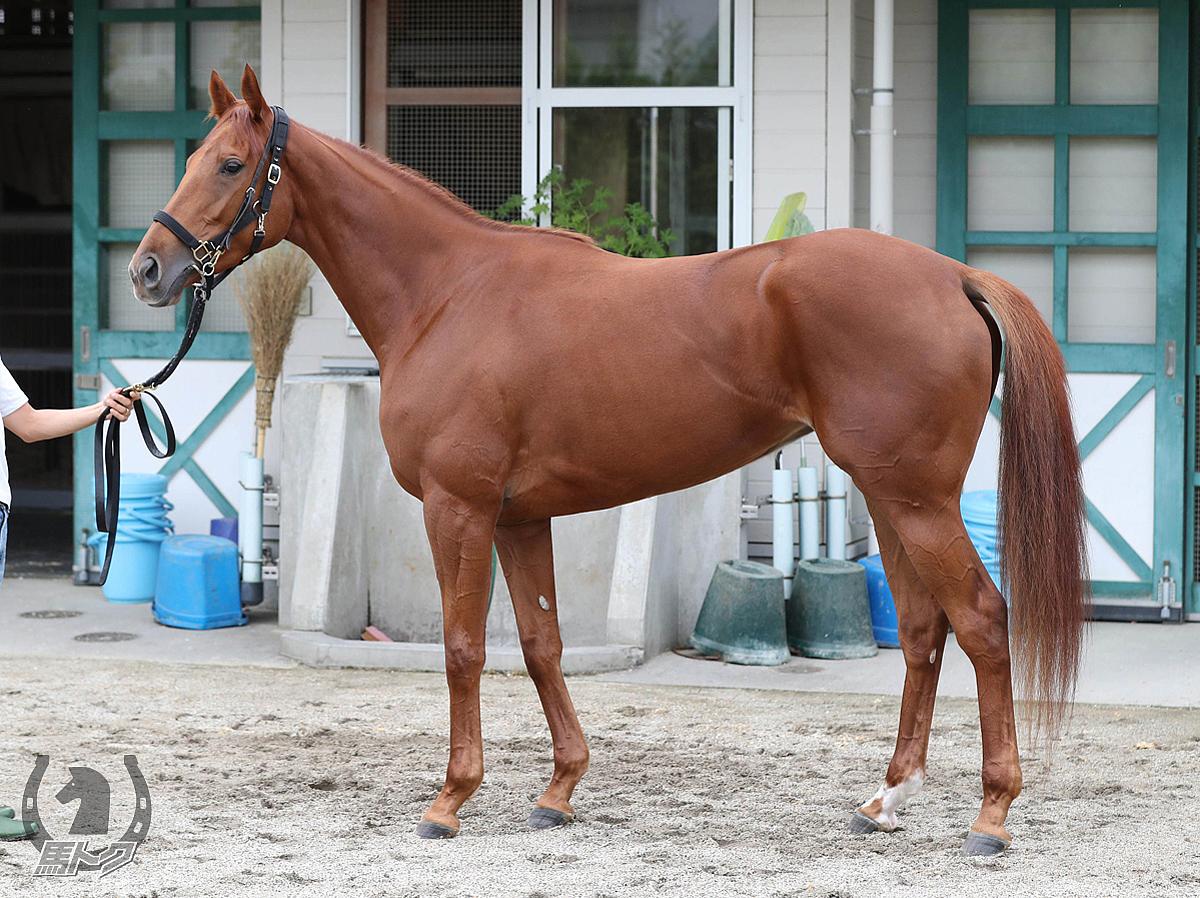 エスポワールの馬体写真