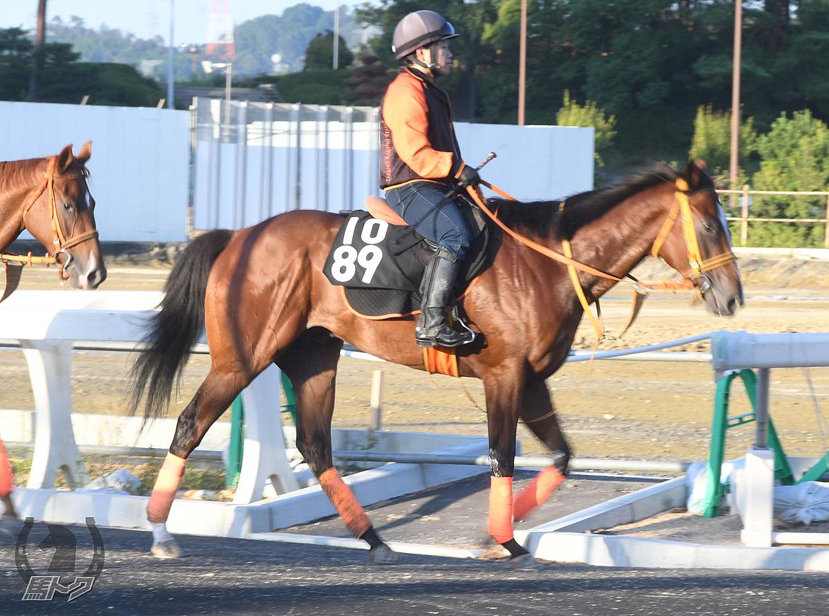 ライトヴェロシティの馬体写真