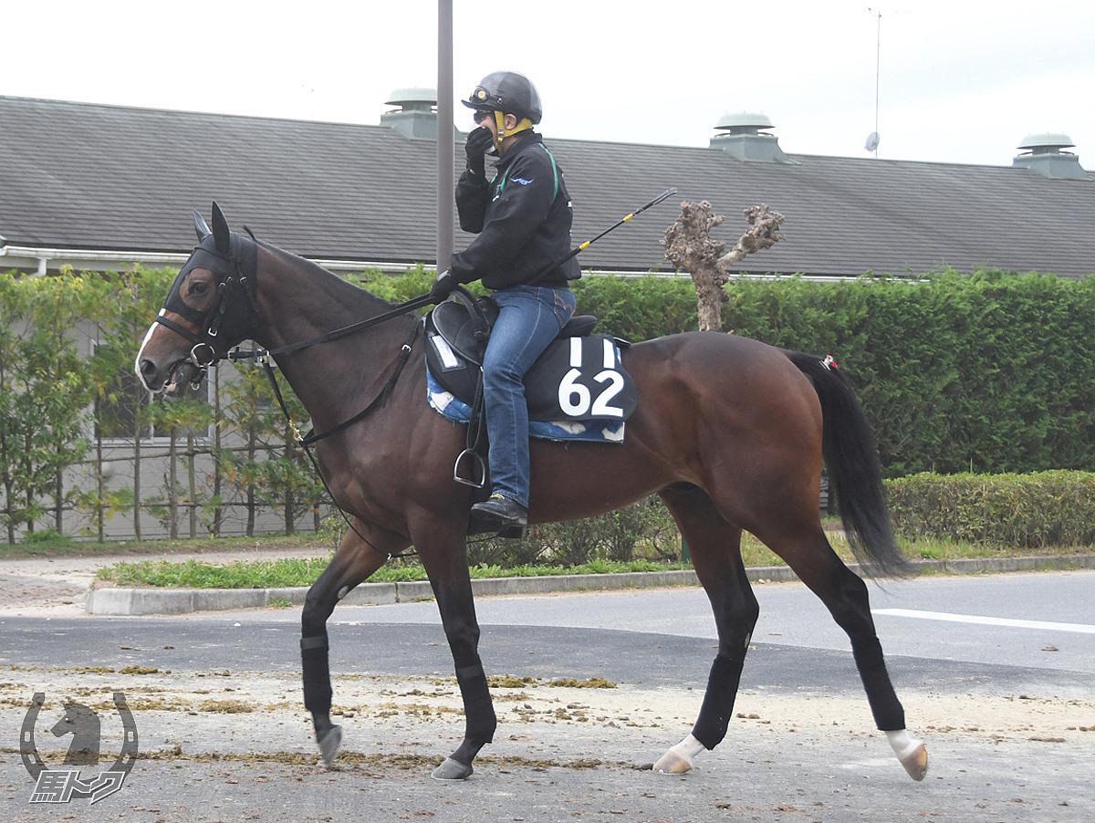 レッドエンヴィーの馬体写真