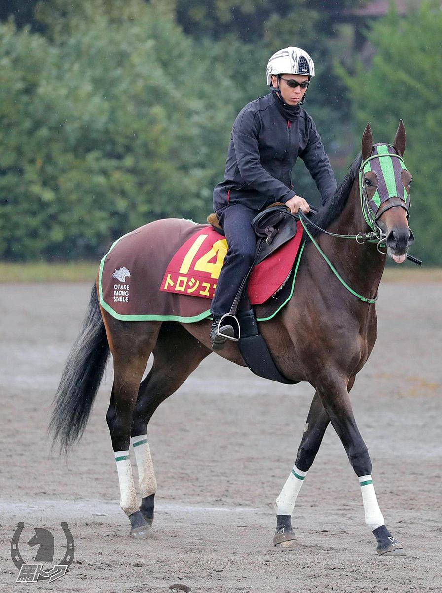 トロシュナの馬体写真