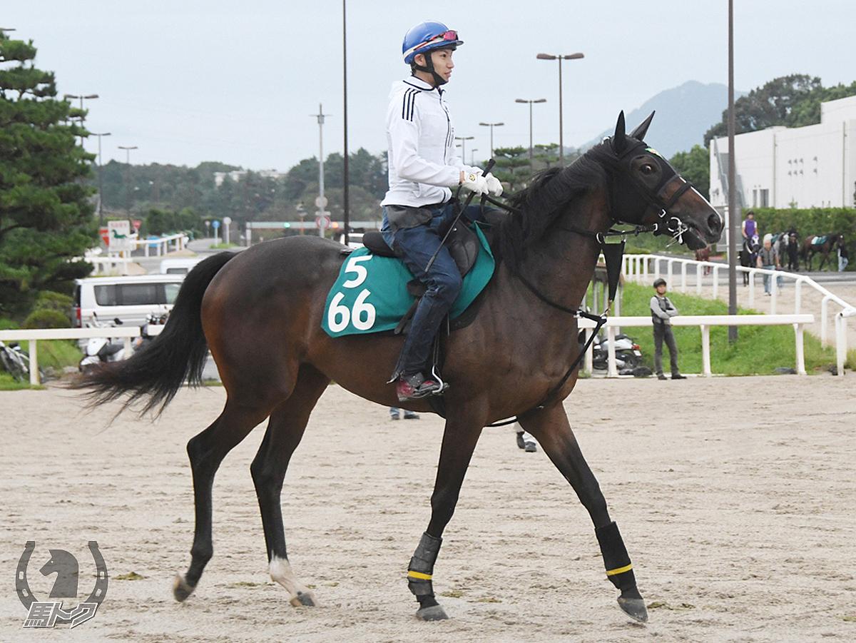 シャムラマートの馬体写真