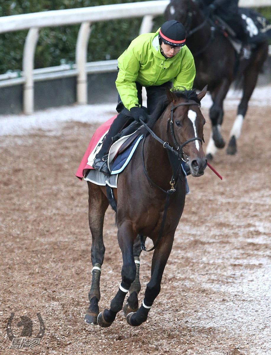 ヴェロックスの馬体写真