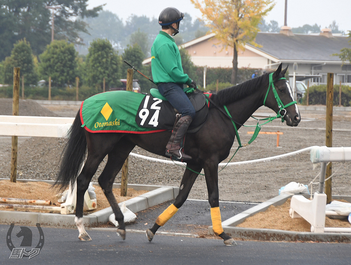 フィブロライトの馬体写真