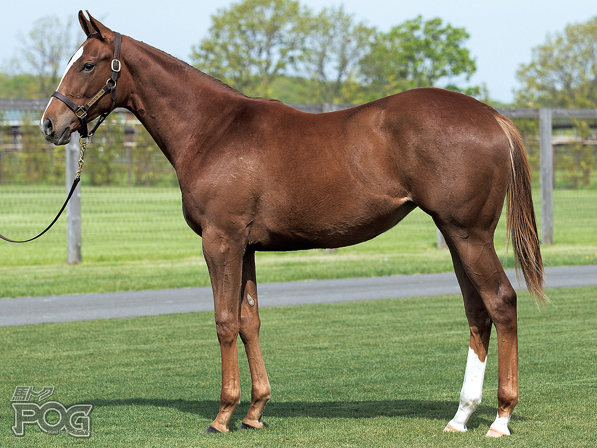 ネブローザの馬体写真
