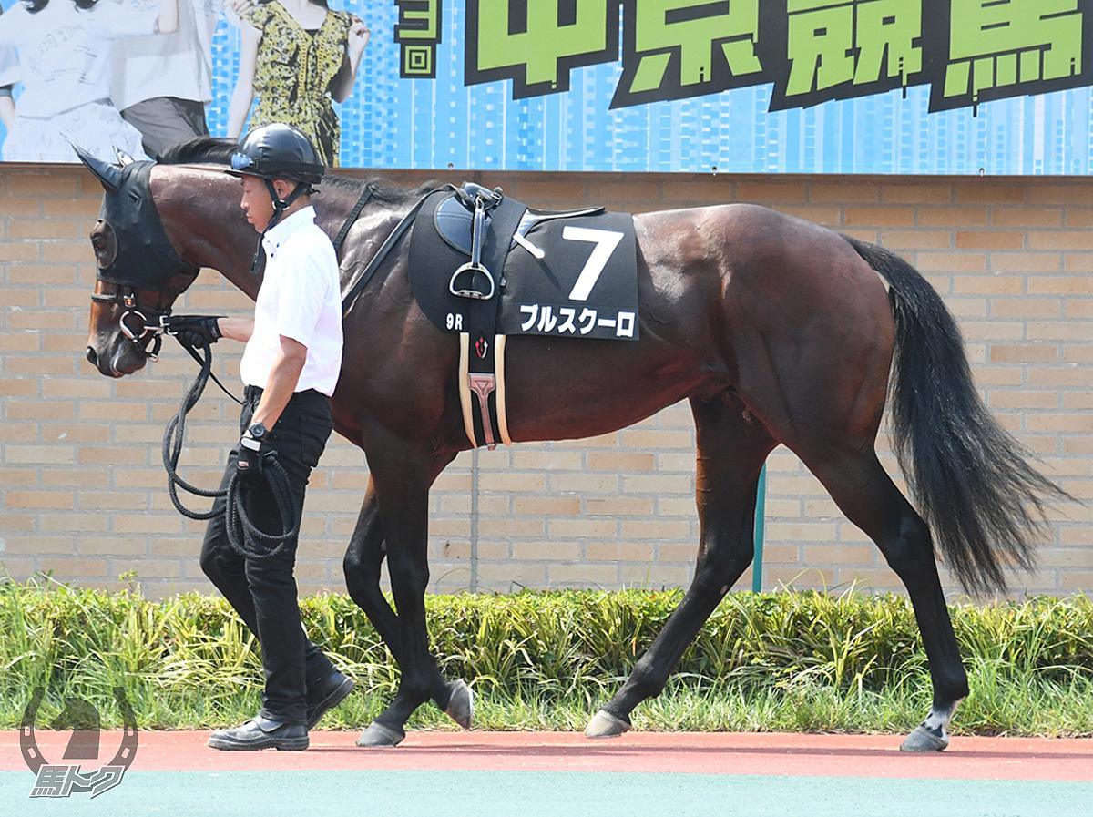 ブルスクーロの馬体写真