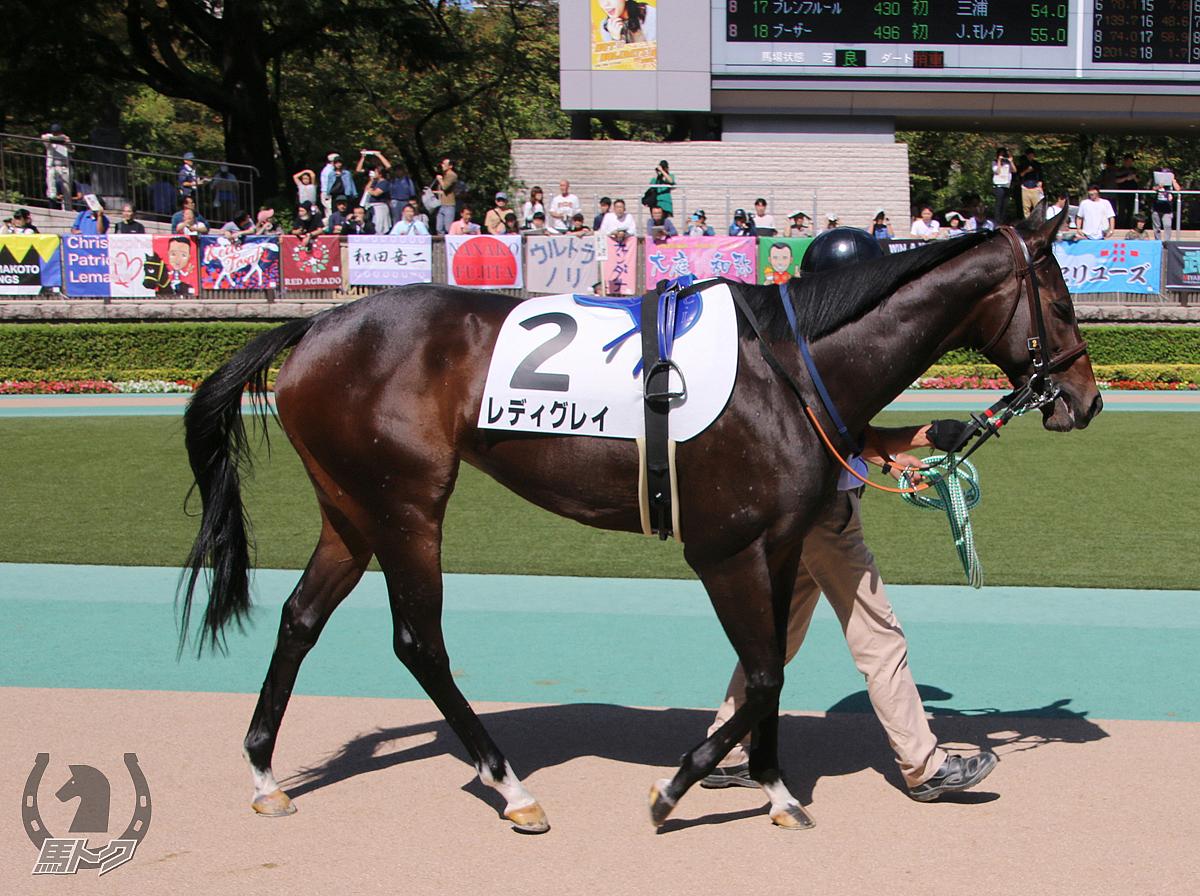 レディグレイの馬体写真