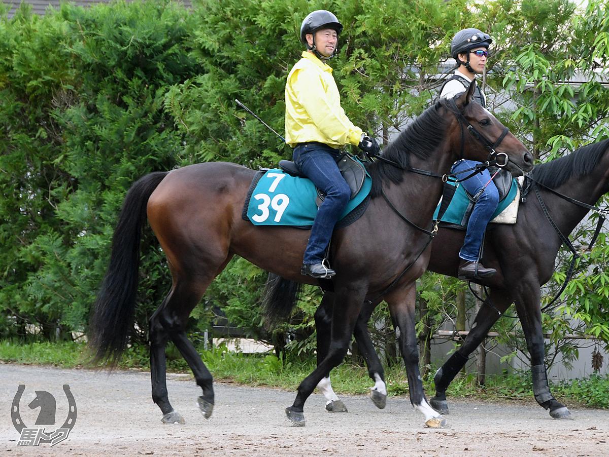 モクレンノツボミの馬体写真