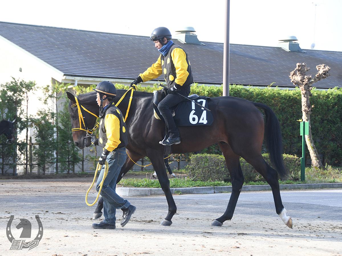 ジェットモーションの馬体写真