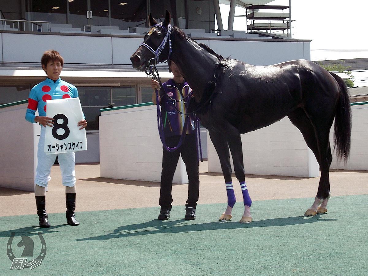 オーシャンスケイプの馬体写真