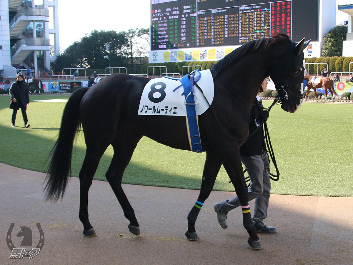 ノワールムーティエの馬体写真