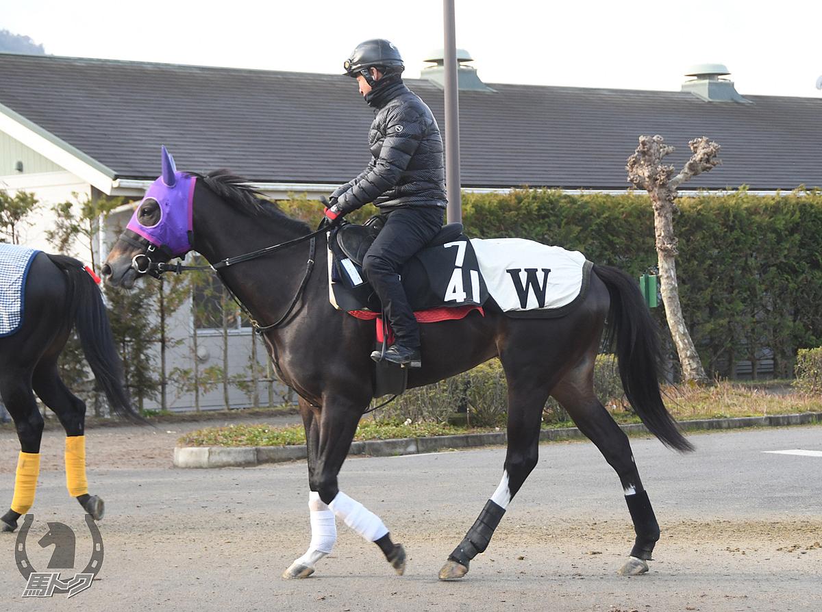 ニューポートの馬体写真