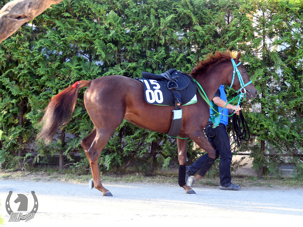 アストライアの馬体写真