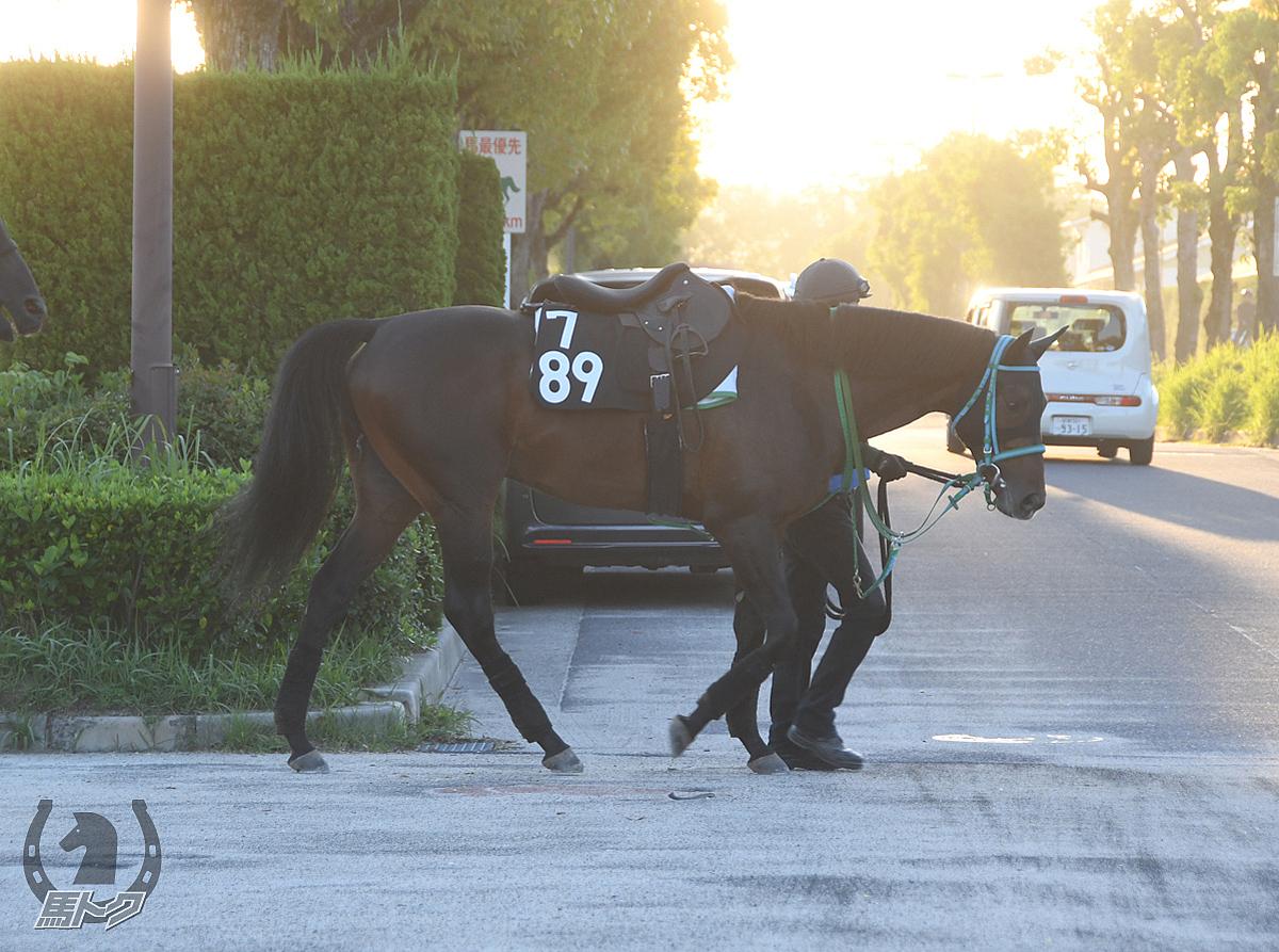 バンクショットの馬体写真