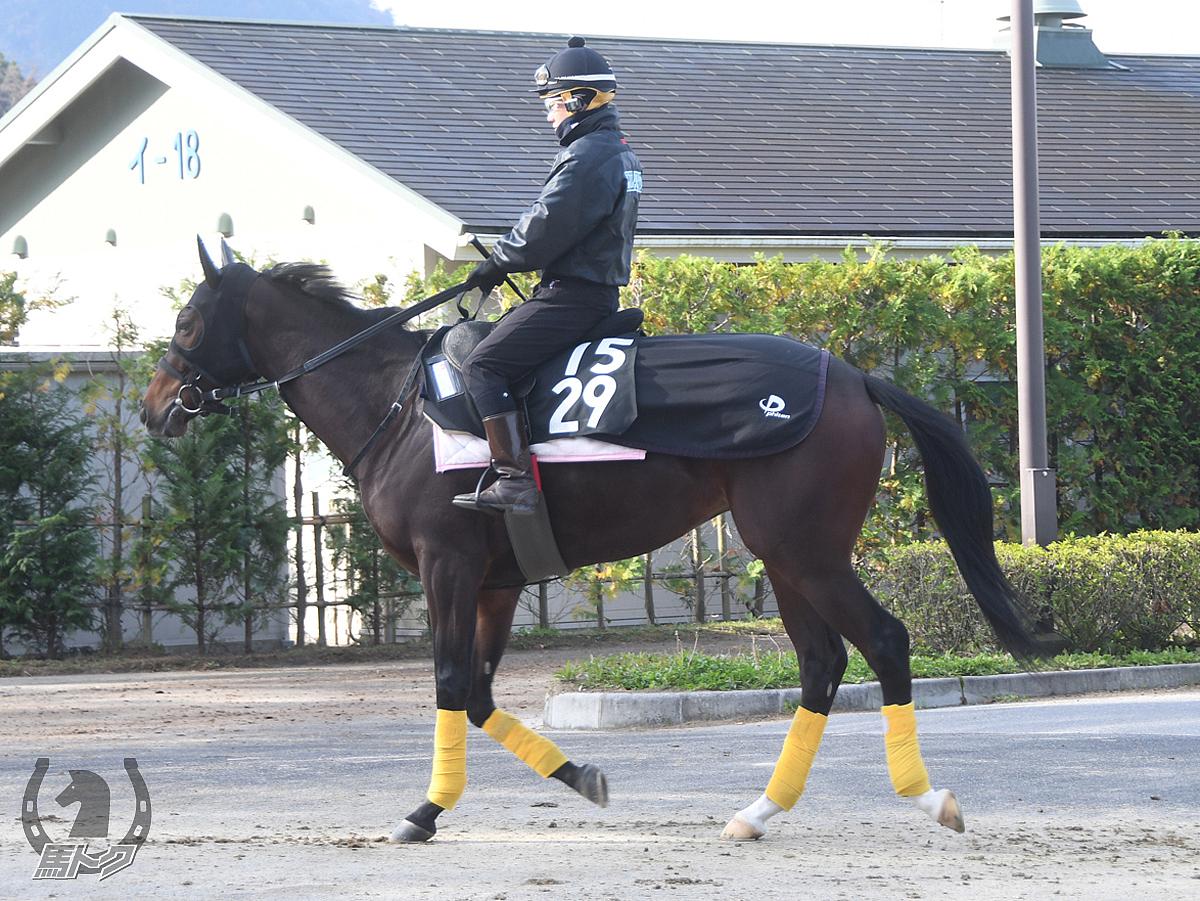 バラーディストの馬体写真