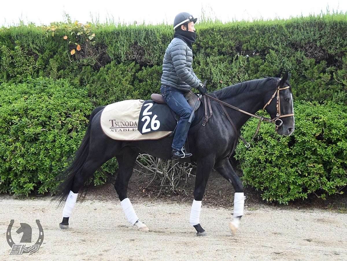 カトルジュールの馬体写真
