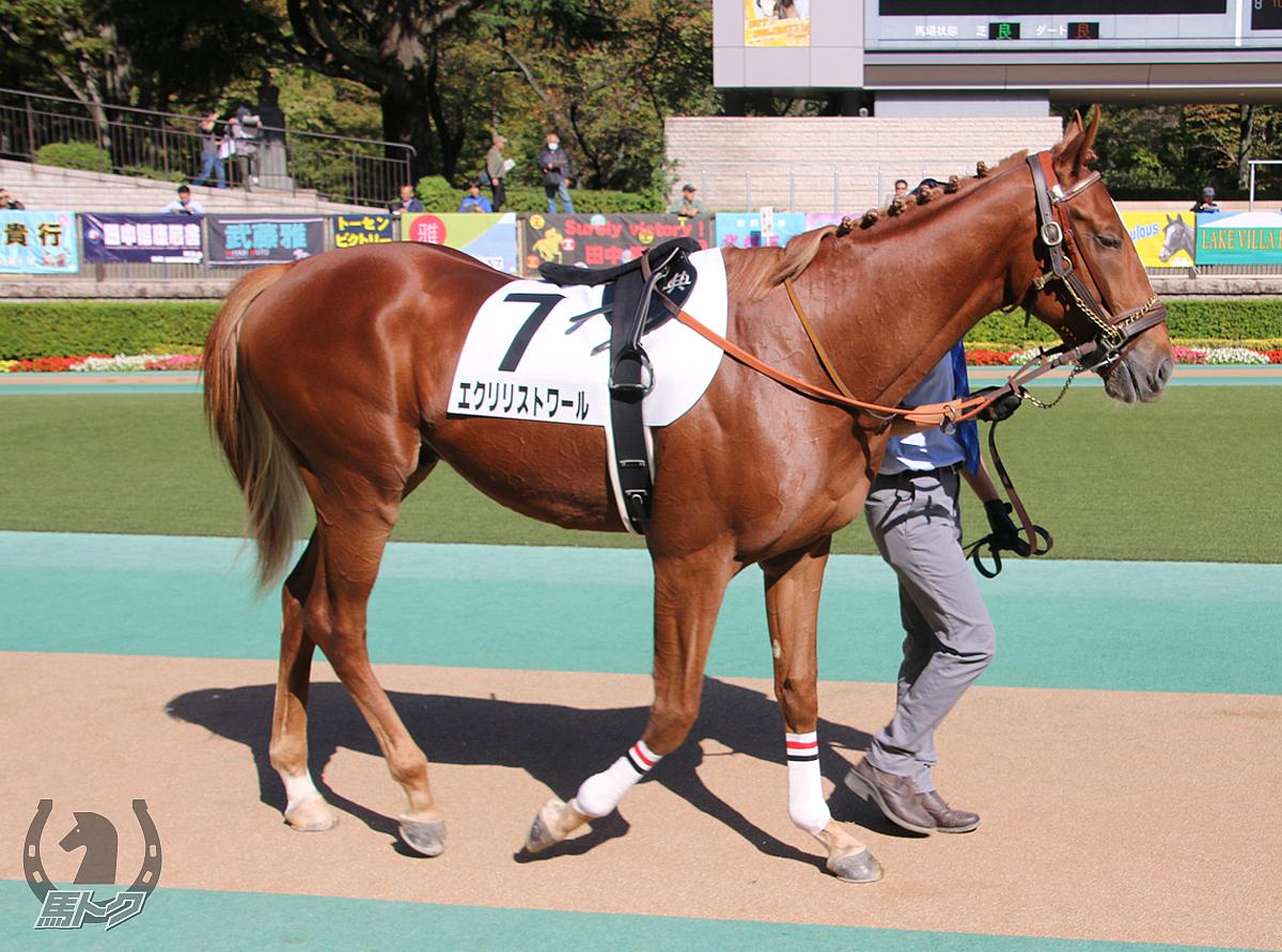 エクリリストワールの馬体写真