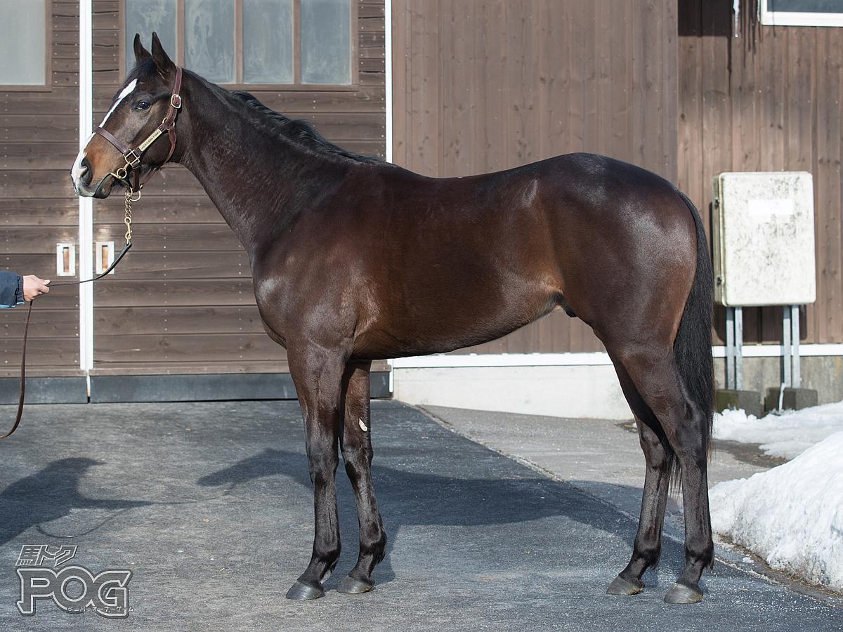 パシフィスタの馬体写真