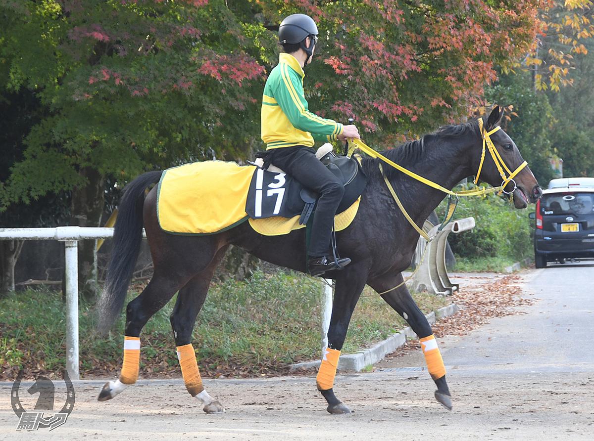 パピヨナージュの馬体写真