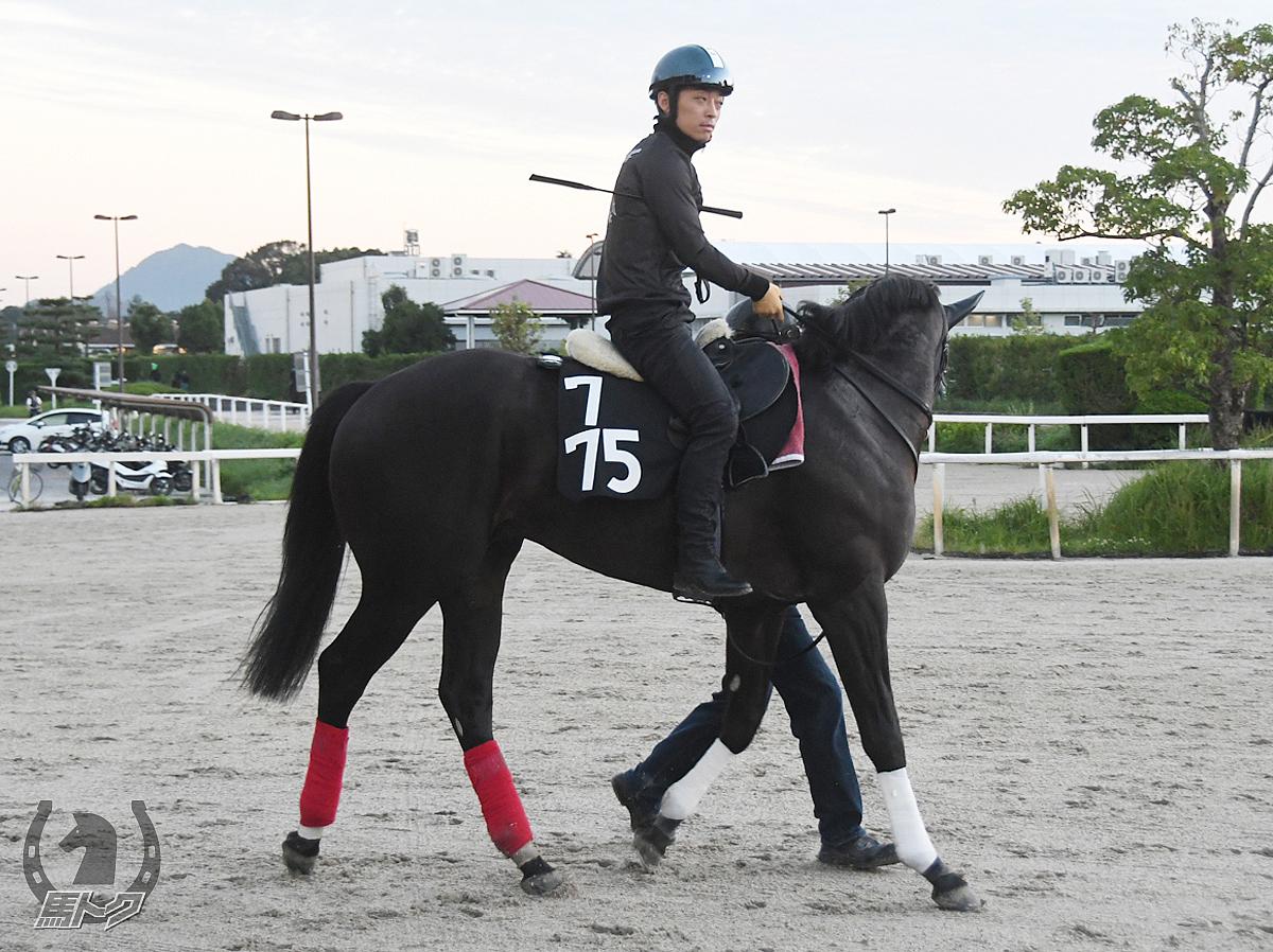 バニュルスの馬体写真