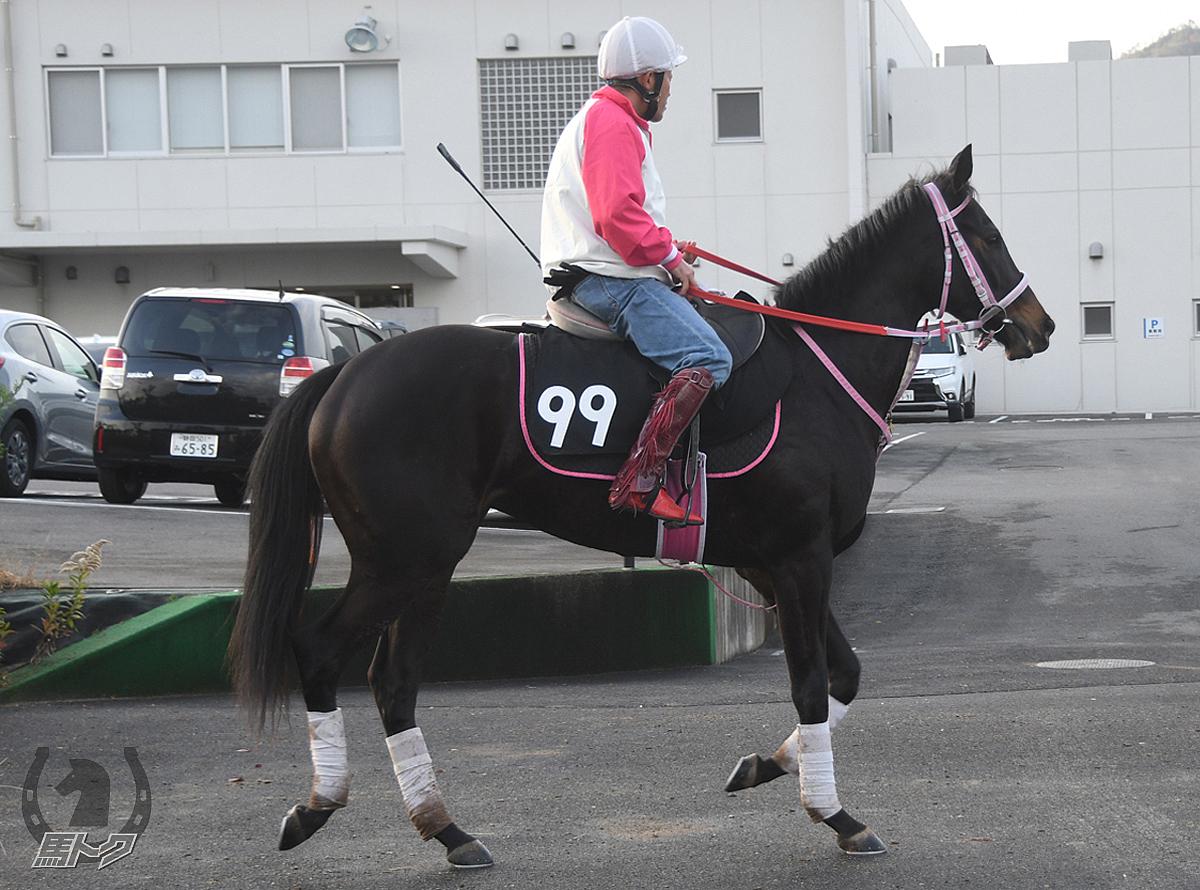 インディゴブルーの馬体写真