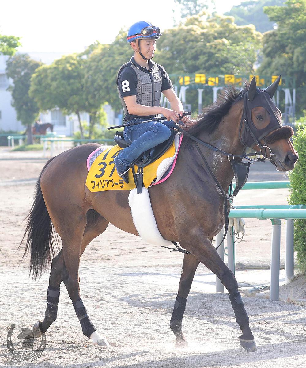 フィリアプーラの馬体写真