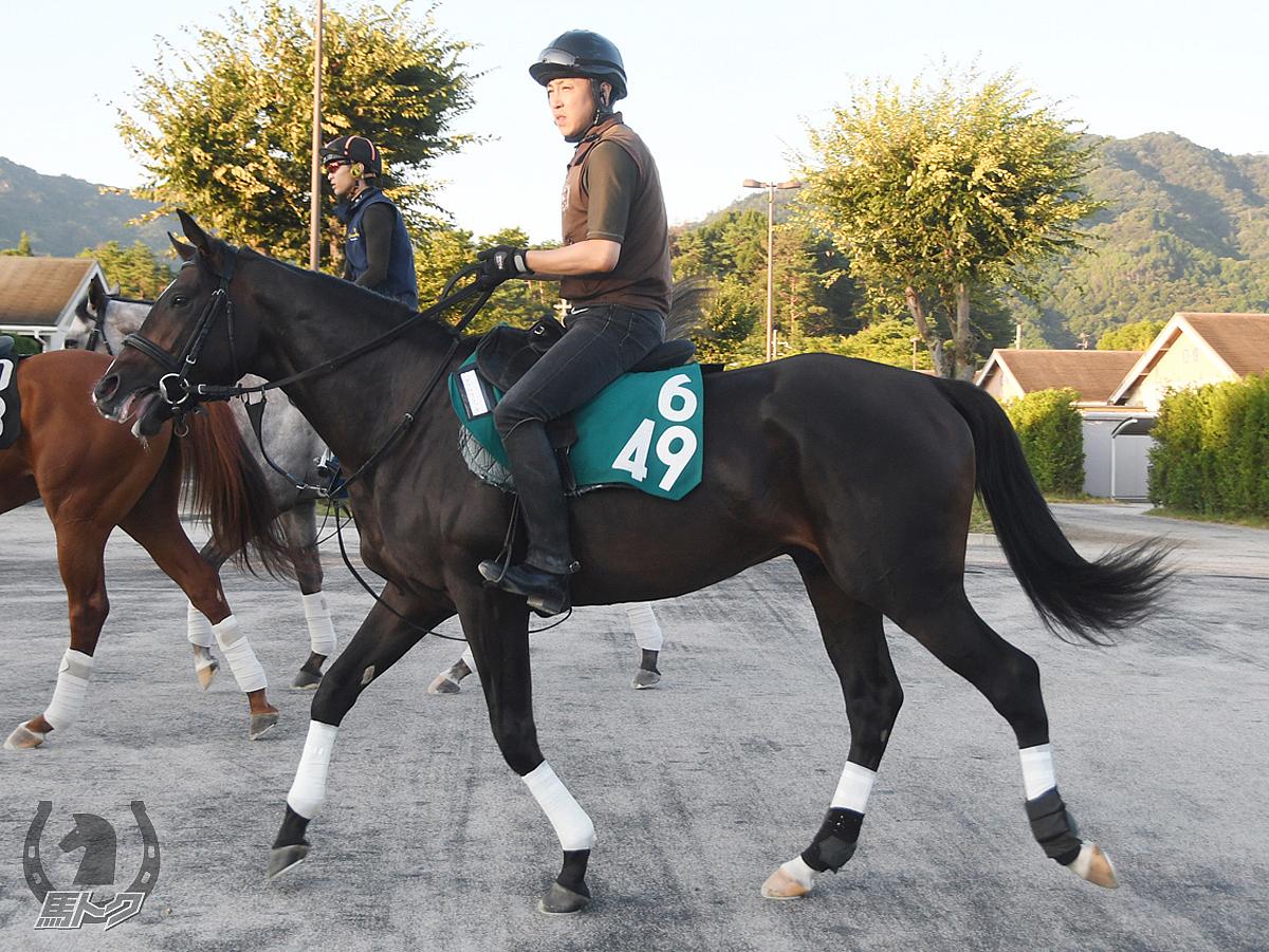ダブルクラッチの馬体写真