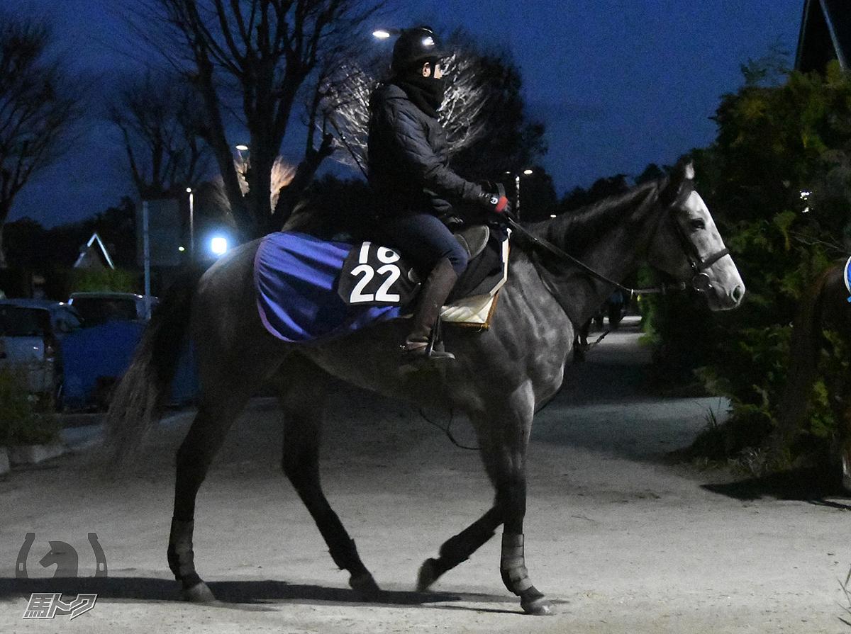 ハッピーアモーレの馬体写真