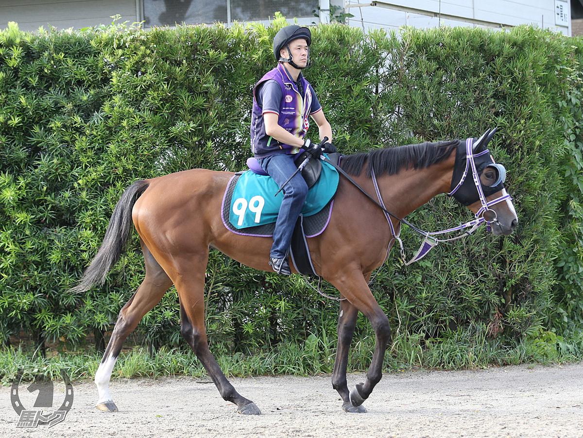 カセドラルベルの馬体写真