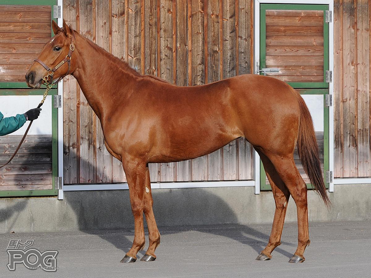 ホーリーホライズンの馬体写真