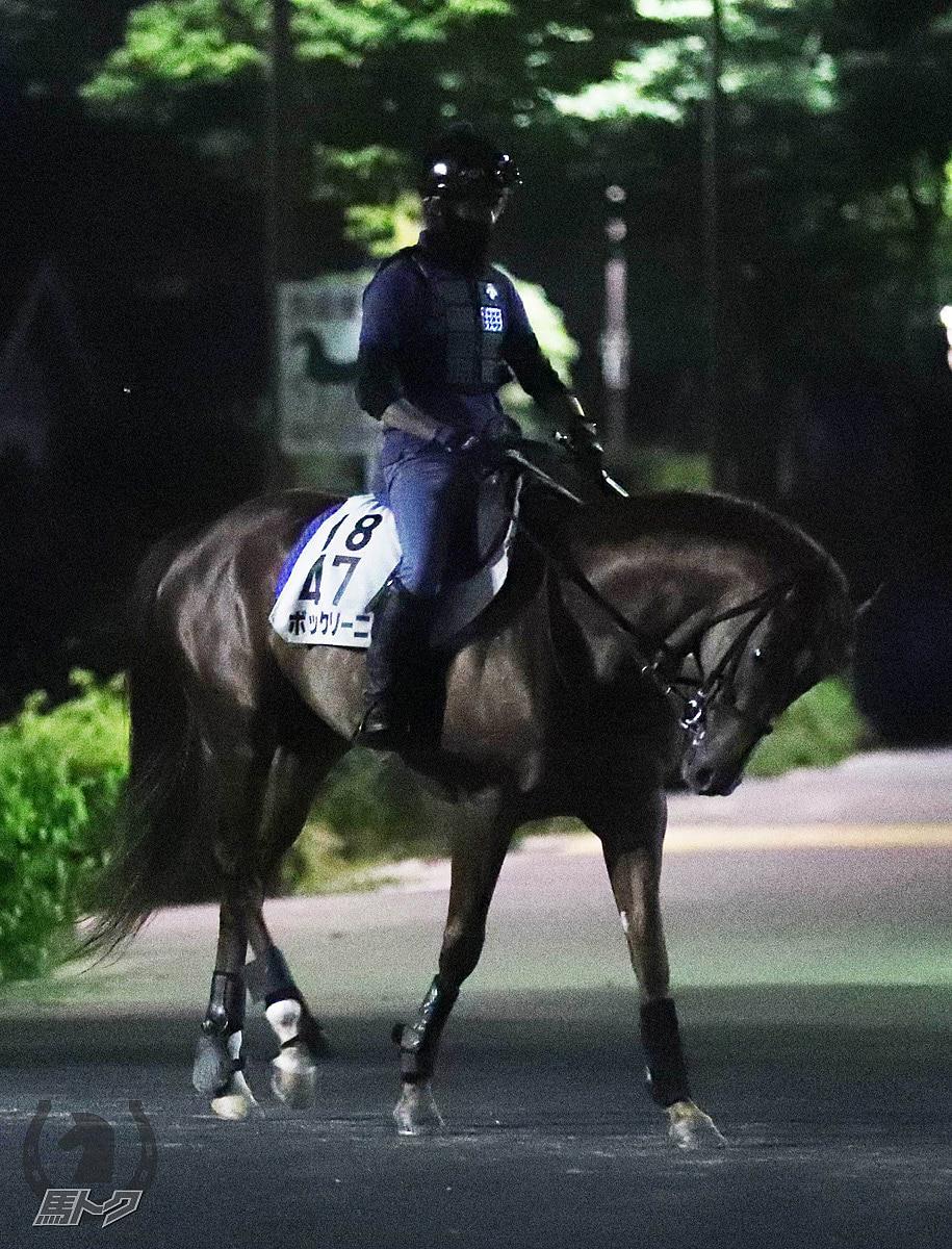 ボッケリーニの馬体写真