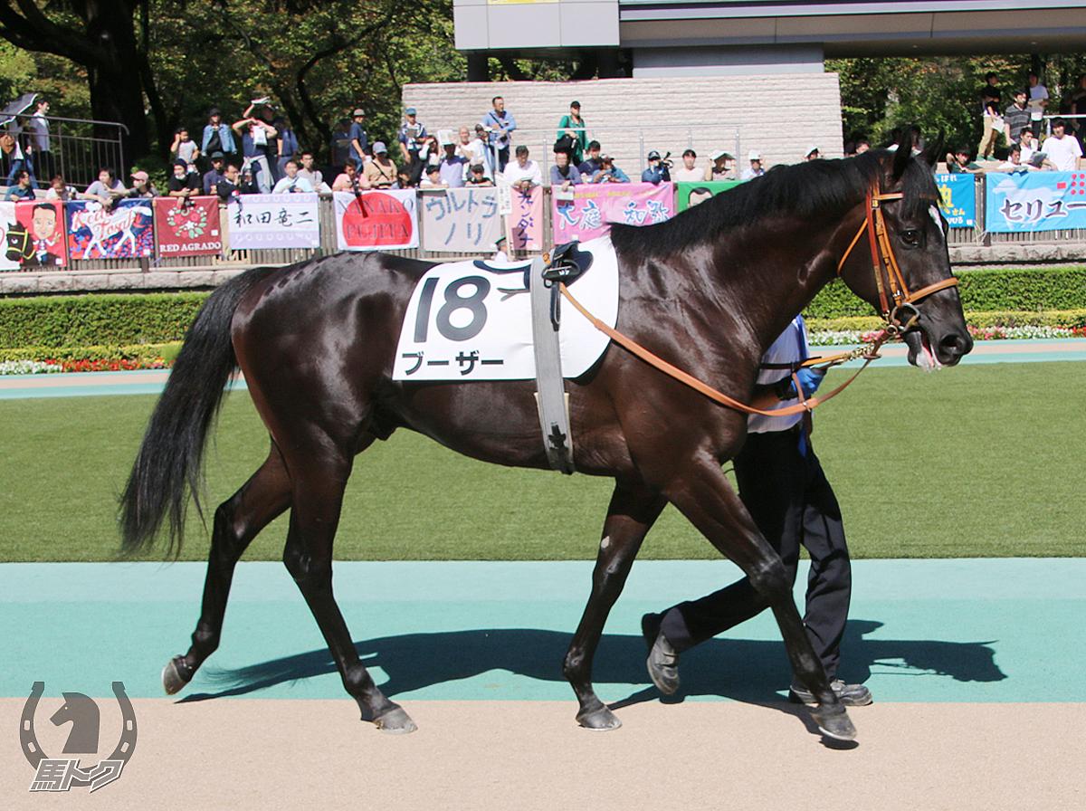 ブーザーの馬体写真