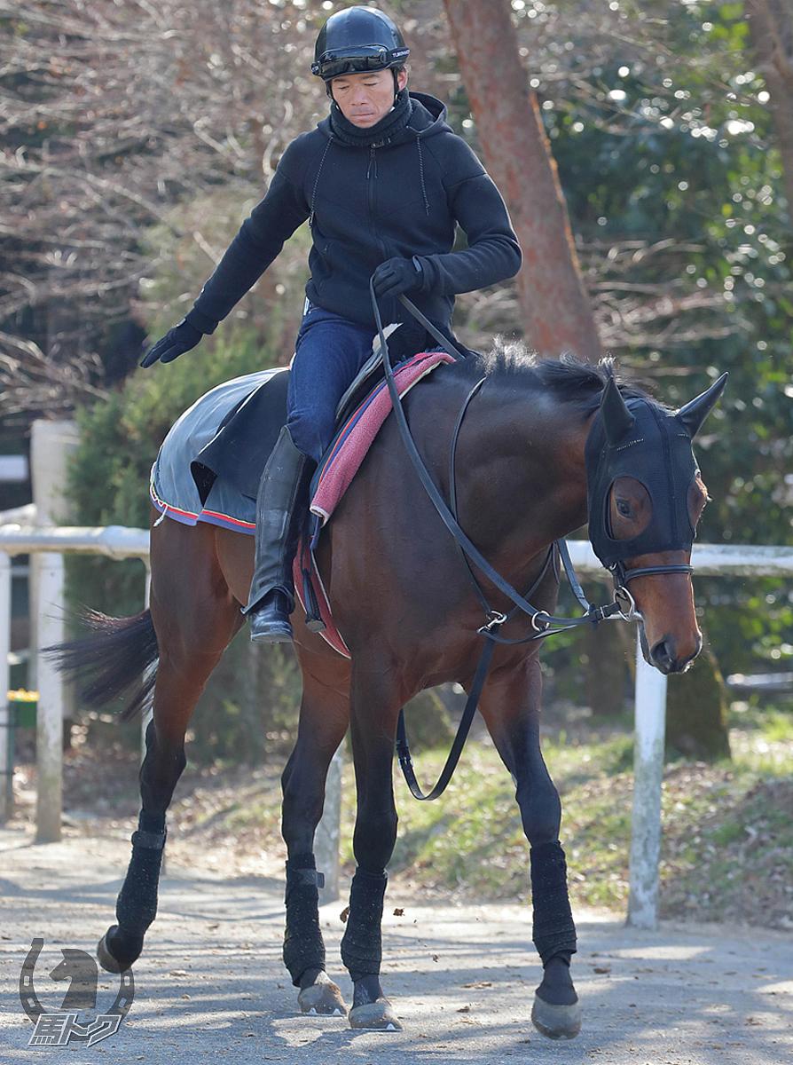 カントルの馬体写真