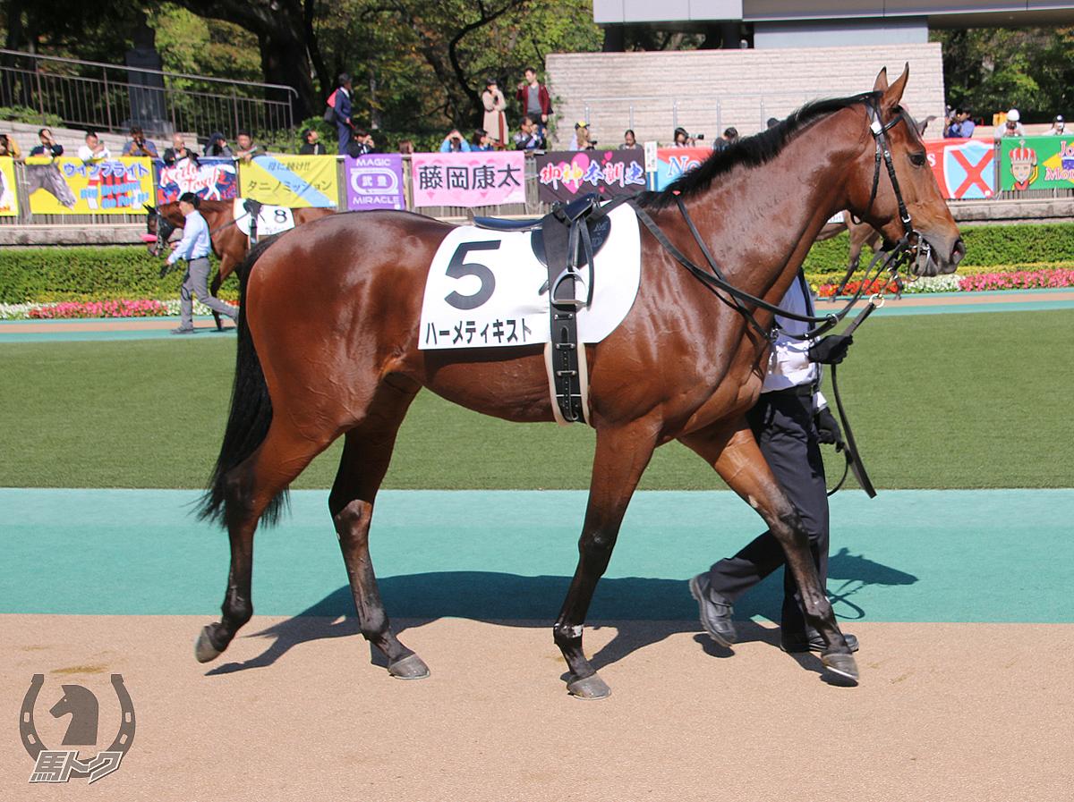 ハーメティキストの馬体写真