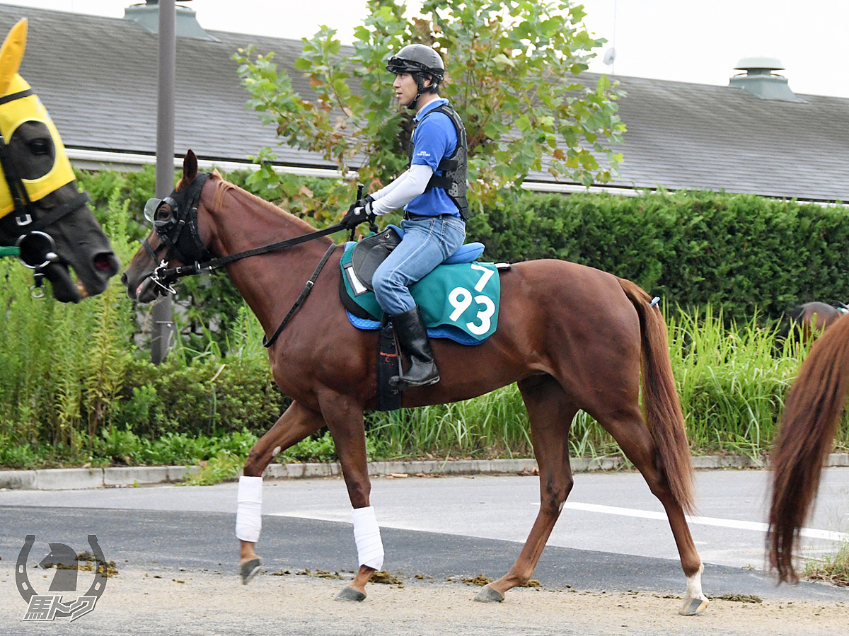 オーロトラジェの馬体写真