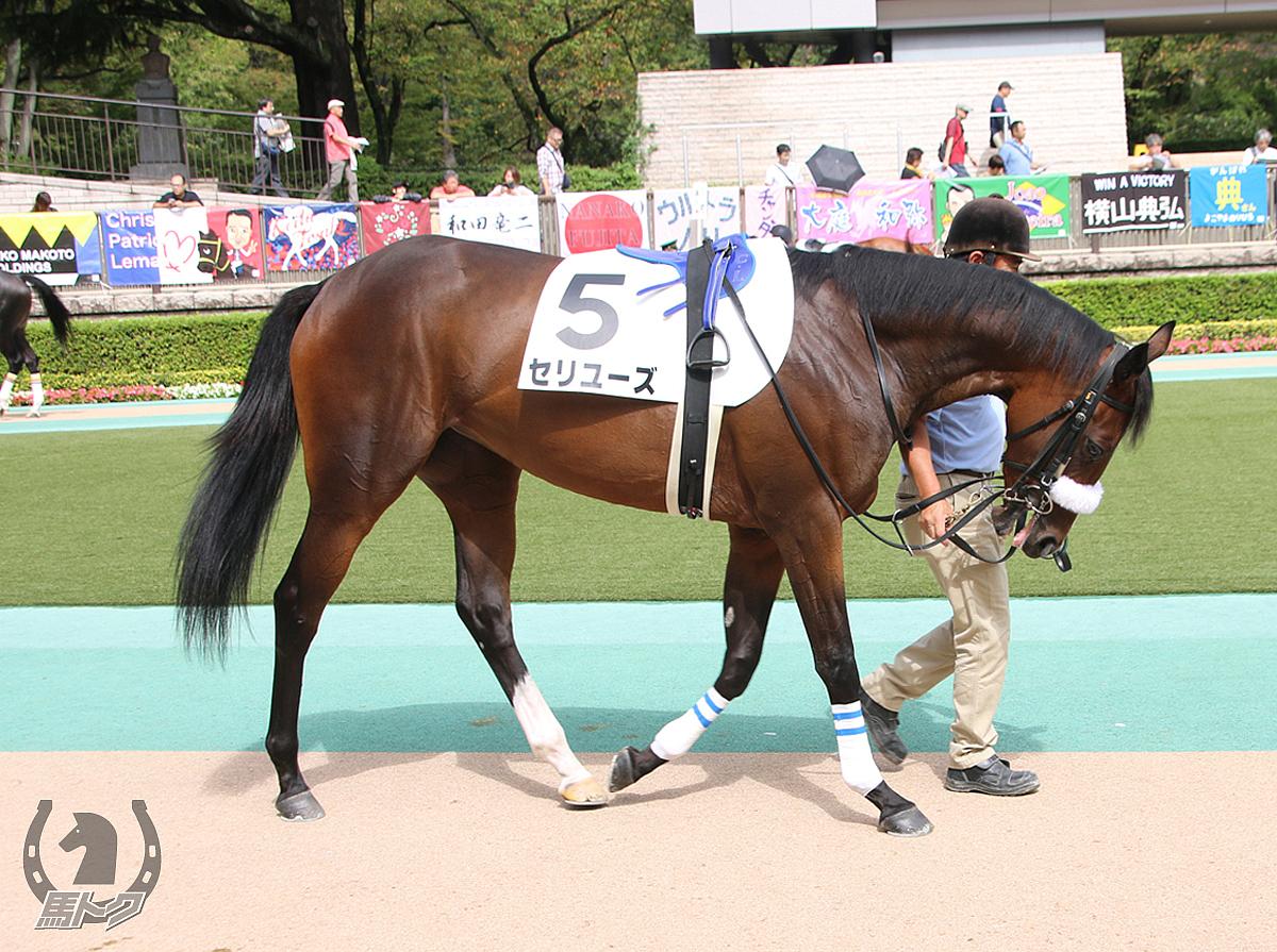 セリユーズの馬体写真