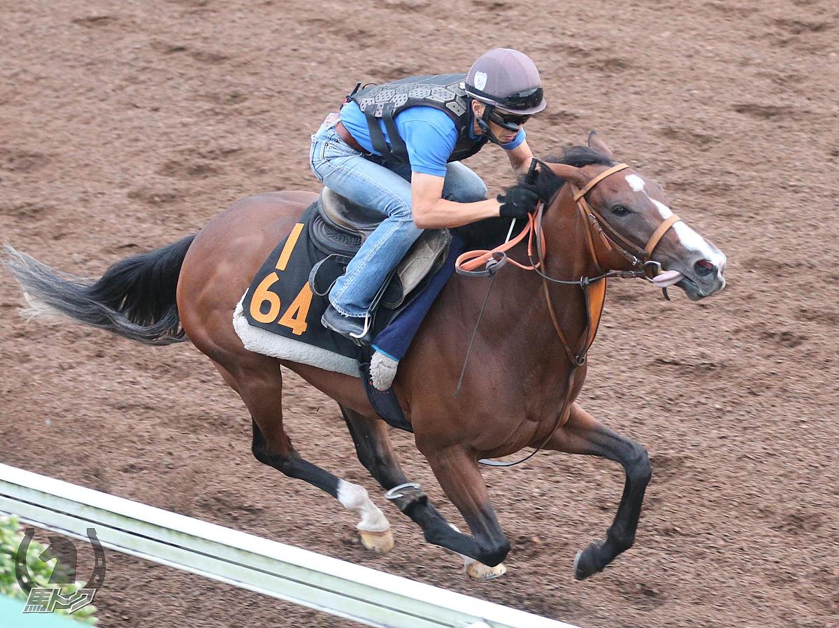 エアジーンの馬体写真