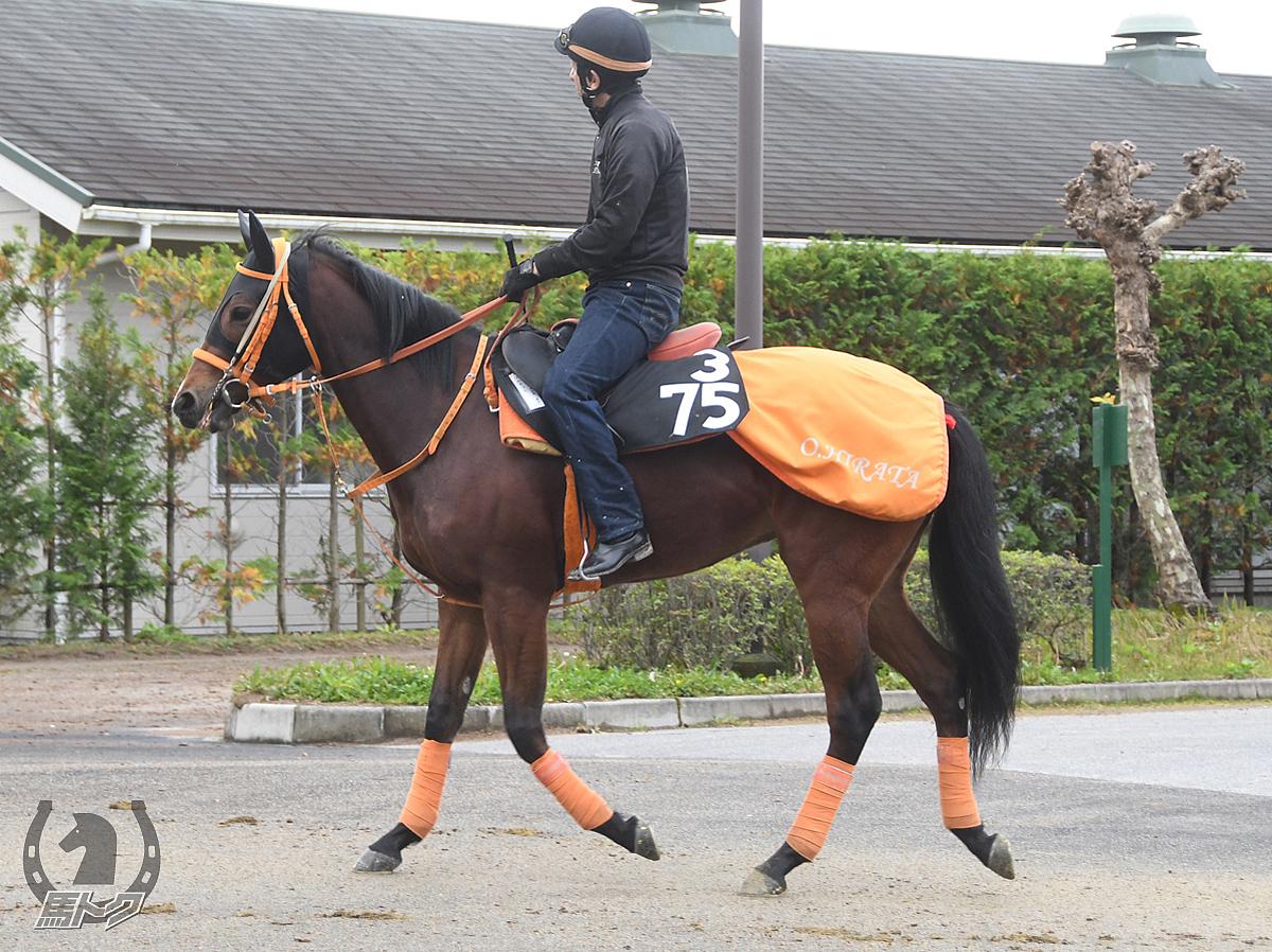 コルネットの馬体写真