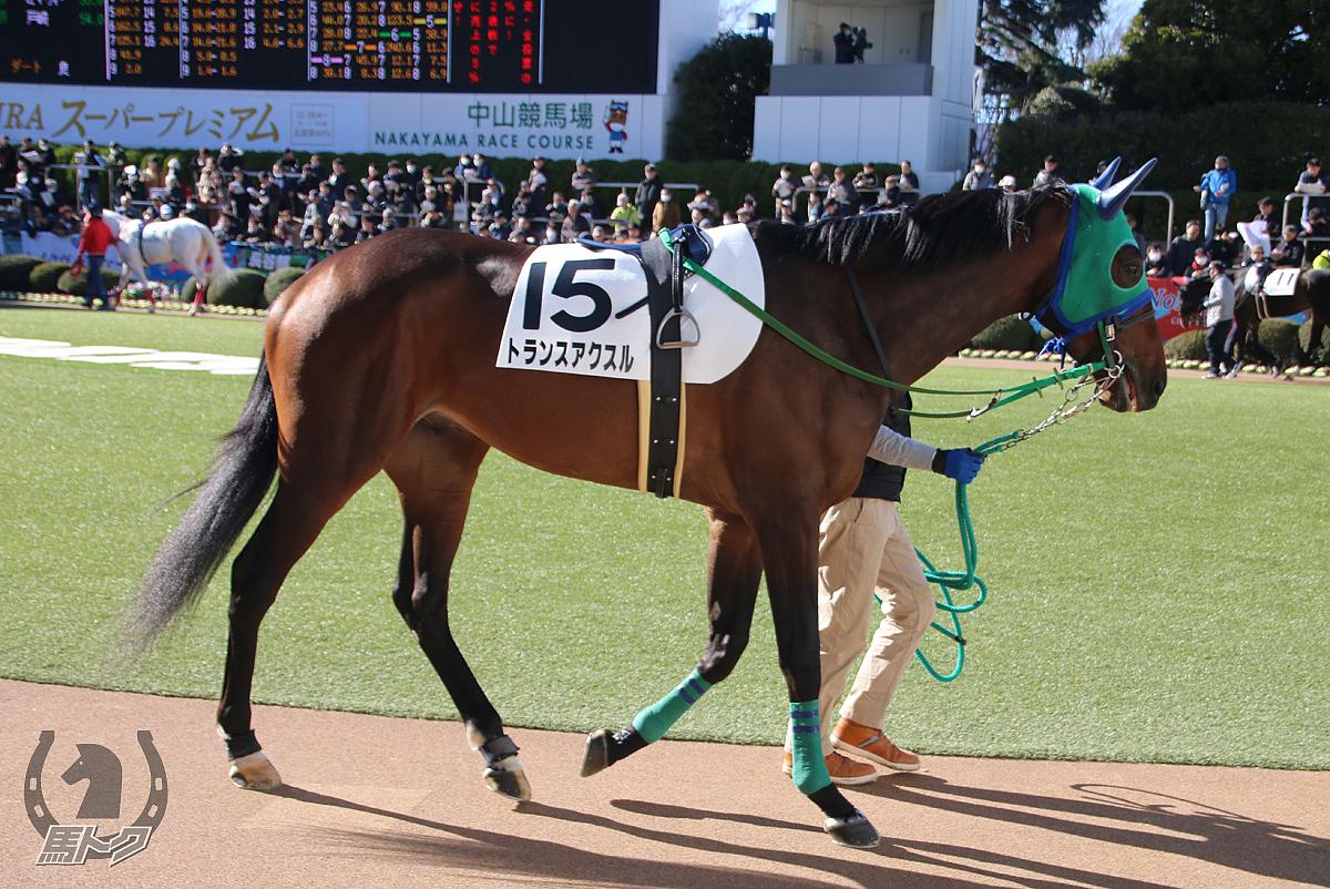 トランスアクスルの馬体写真