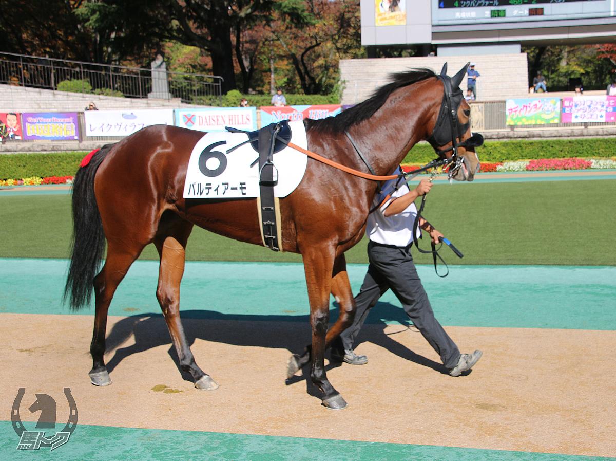 パルティアーモの馬体写真