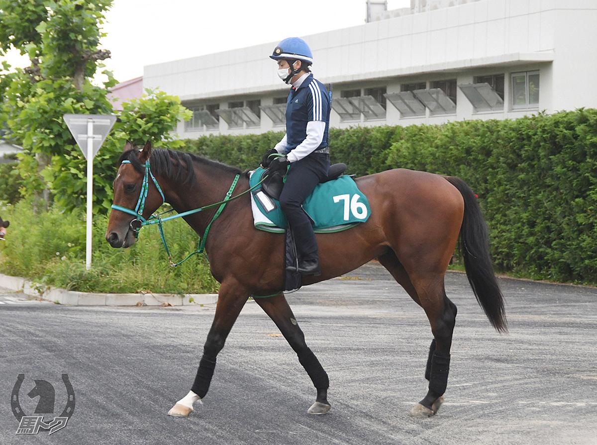 セプタリアンの馬体写真