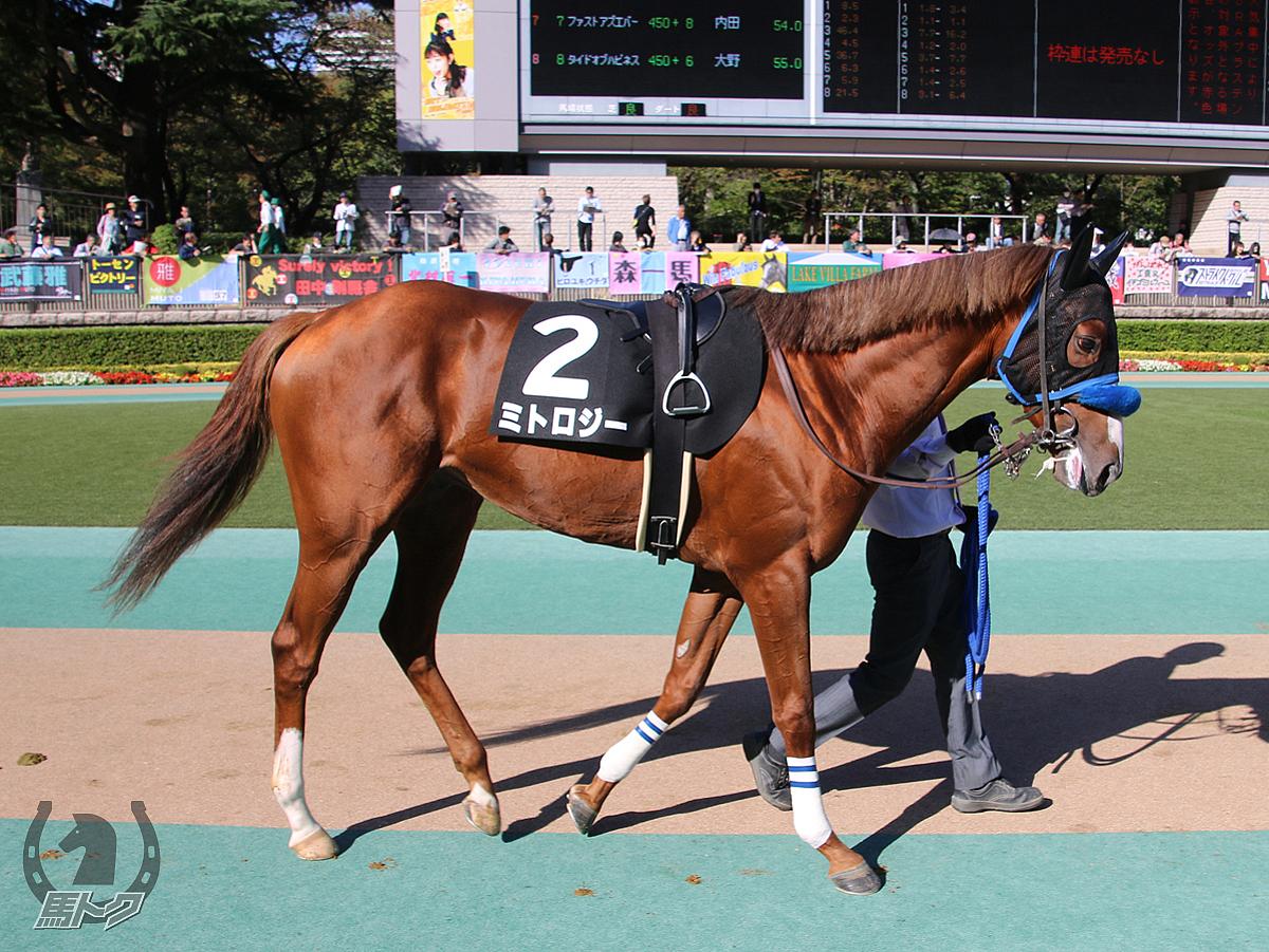 ミトロジーの馬体写真