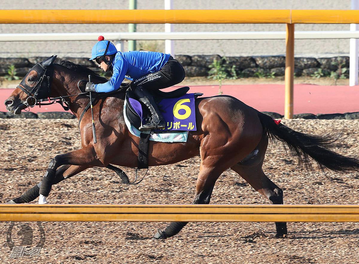 カリボールの馬体写真